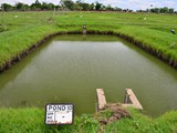 Broodfish pond, Bunda college