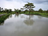 Typical Tilapia pond in Mjinchi